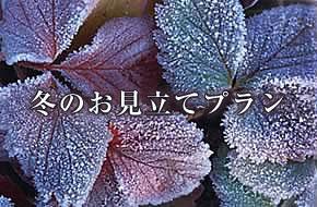 冬のお見立てプラン
