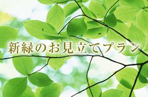 新緑のお見立てプラン